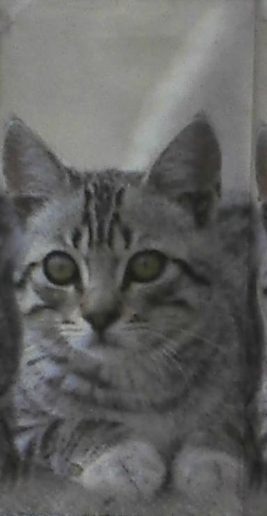 แนวภาพสัตว์ น้องแมวลายเสือ เป็นภาพโทนสีเทา เป็นภาพ 8 บล๊อค กระดาษแนพคินสำหรับทำงาน เดคูพาจ Decoupage Paper Napkins ขนาด 21X22cm