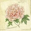แนวภาพดอกไม้ ภาพดอกไม้สีชมพู บนพื้นครีมอ่อน เป็นภาพ 4 บล๊อค กระดาษแนพกิ้นสำหรับทำงาน เดคูพาจ Decoupage Paper Napkins ขนาด 33X33cm
