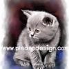 กระดาษสาพิมพ์ลาย rice paper เป็น กระดาษสา สำหรับทำงานฝีมือ เดคูพาจ Decoupage แนวภาพ ลูกแมวเหมียวขนฟูตัวน้อย นั่งคอยเจ้าของกลับบ้าน^^ (ปลาดาวดีไซน์)