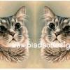 กระดาษเดคูพาจพิมพ์ลาย สำหรับทำงาน เดคูพาจ Decoupage งานฝีมือ งาน Handmade แนวภาพ แมวเหมียวน้อยกลอยใจทำหน้าสงสัย อะไรเอ่ย เป็นภาพวาดสีน้ำมัน pladao design