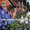 กระดาษเดคูพาจพิมพ์ลาย สำหรับทำงาน เดคูพาจ Decoupage งานฝีมือ งาน Handmade แนวภาพ บ้านและสวน บ้านพักฤดูหนาว ในดงดอกไม้สีสันสวยสดสบายตา อยู่แล้วสบายใจ pladao design