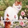 กระดาษสาพิมพ์ลาย สำหรับทำงาน เดคูพาจ Decoupage แนวภาพ แมวขาว หน้า-หางน้ำตาล ขนปุย นั่งอยู่ข้างๆ ดอกกุหลาบสีชมพุ