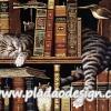 กระดาษสาพิมพ์ลาย สำหรับทำงาน เดคูพาจ Decoupage แนวภาำพ แมวลายก้างปลาสีเทา นอนบนชั้นหนังสือ ในห้องสมุด (ปลาดาวดีไซน์)