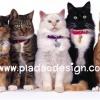 กระดาษสาพิมพ์ลาย rice paper เป็น กระดาษสา สำหรับทำงาน เดคูพาจ Decoupage แนวภาพ น้องแมวขนฟูยกขบวนมากัน 5 ตัว 5 ลาย มาให้ถ่ายรูป (ปลาดาว ดีไซน์)