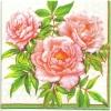 แนวภาพดอกไม้ ดอกกุหลาบ GRACIA บนพื้นสีครีม เป็นกระดาษ 4 บล๊อค กระดาษแนพคินสำหรับทำงาน เดคูพาจ Decoupage Paper Napkins เป็นภาพ 4 บล๊อค ขนาด 25X25 ซม
