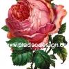 กระดาษสาพิมพ์ลาย สำหรับทำงาน เดคูพาจ Decoupage แนวภาำพ ภาพวาด ดอกกุหลาบสีแดงส้ม ดอกใหญ่มาก ก้านแข็ง หนามเยอะ กลีบสวย (ปลาดาวดีไซน์)