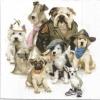 แนวภาพสัตว์ เหล่าน้องหมาหลายสายพันธ์รวมตัวเป็นแก๊งค์ ภาพโทนสีขาว เป็นภาพ 4 บล๊อค กระดาษแนพกิ้นสำหรับทำงาน เดคูพาจ Decoupage Paper Napkins ขนาด 33X33cm กระดาษรุ่นพิเศษ