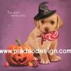 กระดาษสาพิมพ์ลาย สำหรับทำงาน เดคูพาจ Decoupage แนวภาำพ ภาพวาด ลูกหมาโกลเด้น รีทรีฟเวอร์ตัวน้อยใส่หมวกแม่มดคาบอมยิ้ม นั่งข้างฟักทองในวัน ฮาโลวีน Halloween มีคำคมวลีเด็ด (ปลาดาวดีไซน์)