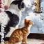 กระดาษสาพิมพ์ลาย สำหรับทำงาน เดคูพาจ Decoupage แนวภาำพ แมว2 วัย 2 สี นั่งมองบรรดานกน้อยเล่นหิมะกันอยู่ที่นอกบ้าน thumbnail 1