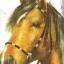 แนวภาพสัตว์ ภาพวาดม้า บนพื้นขาว ภาพแนวยาว กระดาษแนพคินสำหรับทำงาน เดคูพาจ Decoupage Paper Napkins ขนาด 21X22cm thumbnail 1
