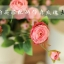 Pre-Order ถังใส่ดอกไม้ เหล็กเคลือบสี ทรงสูง มีหู ลาย Original Sweet Flowers 2 ใบเซต มี 6 สี thumbnail 3