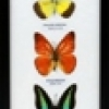 Butterfly by 5-long