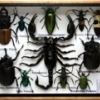 Assorted insect set S with scorpion