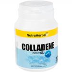 คอลลาดีน(60 แคปซูล) กระดูกอ่อนปลาฉลาม บำรุงกระดูก ผิว ผม เล็บ รูปร่างเฟิร์ม ป้องกันข้อเสื่อม เข่าเสื่อม และมะเร็ง